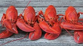 lobster gang